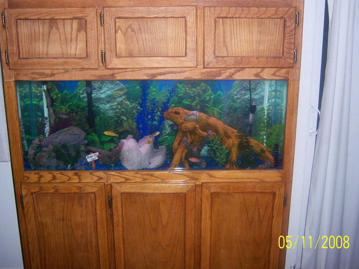 55 gallons freshwater fish tank (mostly fish and non-living decorations) - 55 gallon fishtank with cool new wood in it!!