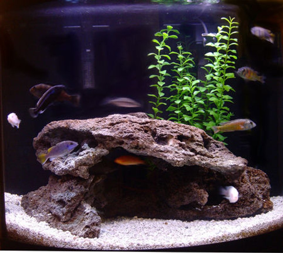 26 gallons freshwater fish tank (mostly fish and non-living decorations) - 26G Mixed African Tank.