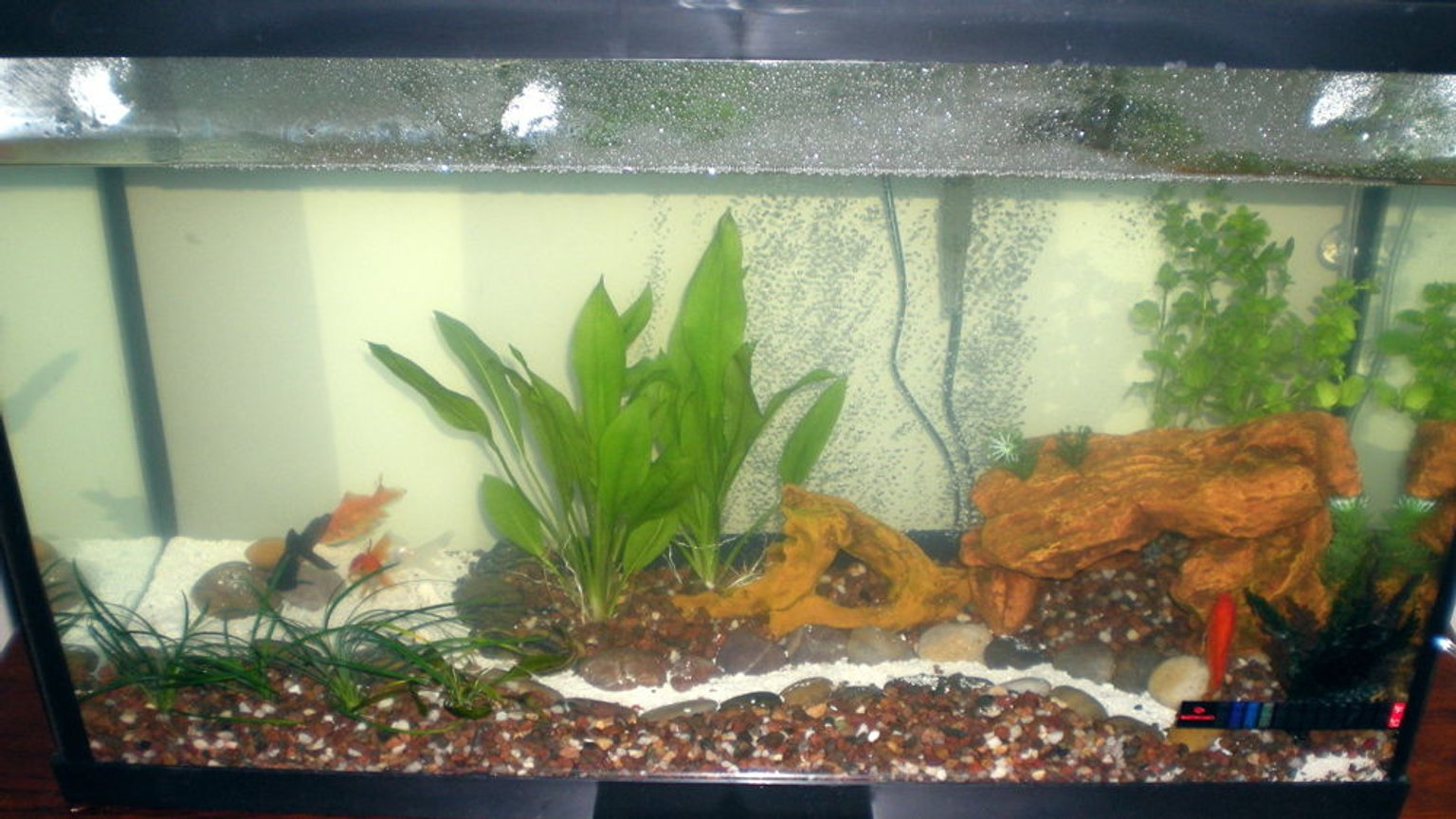 30 gallons freshwater fish tank (mostly fish and non-living decorations) - Goldfish Tank