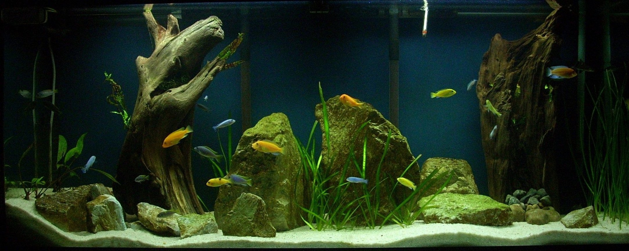120 gallons freshwater fish tank (mostly fish and non-living decorations) - 120 Gallon Mbuna Tank