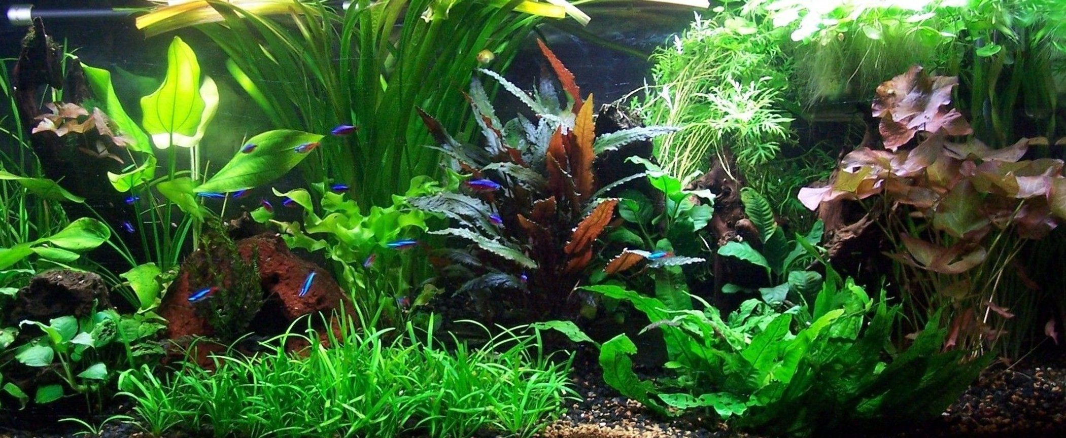75 gallons freshwater fish tank (mostly fish and non-living decorations) - 06/04/08