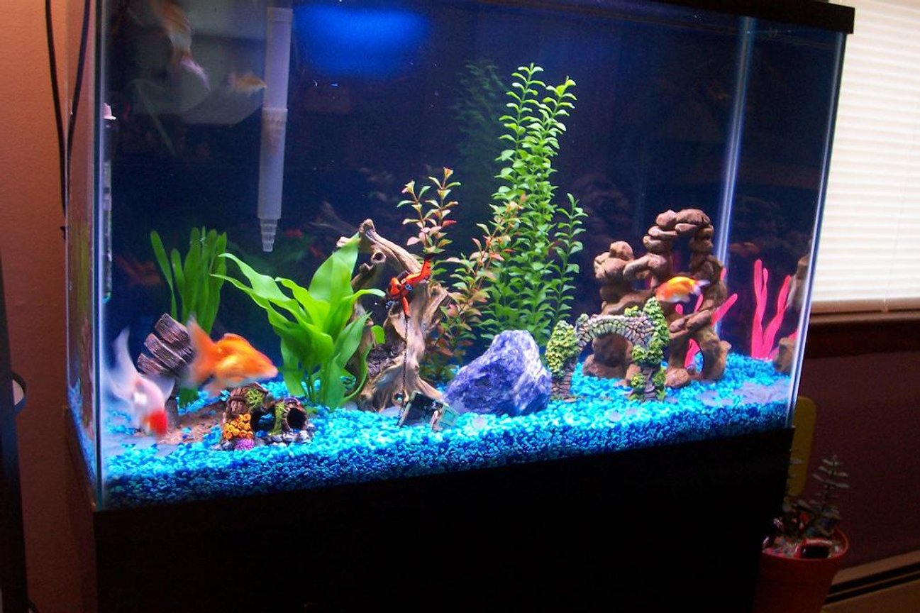 20 gallons freshwater fish tank (mostly fish and non-living decorations) - my new 45 gal, tank it has 7 goldfishes, 3 cory's and 2 pleco's..2 whisper 70 filters,w/ bluejean color gravel.
