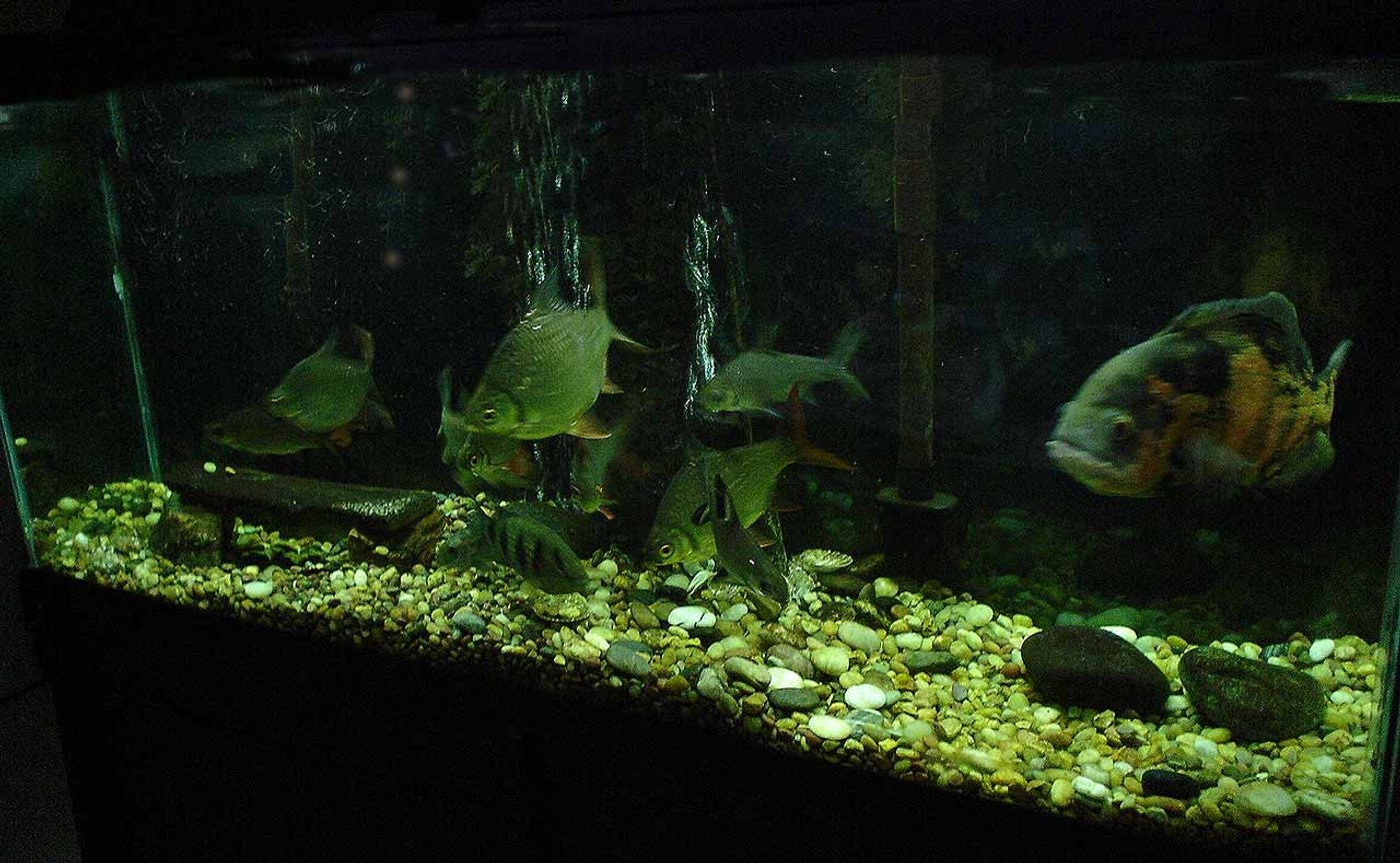 55 gallons freshwater fish tank (mostly fish and non-living decorations) - .