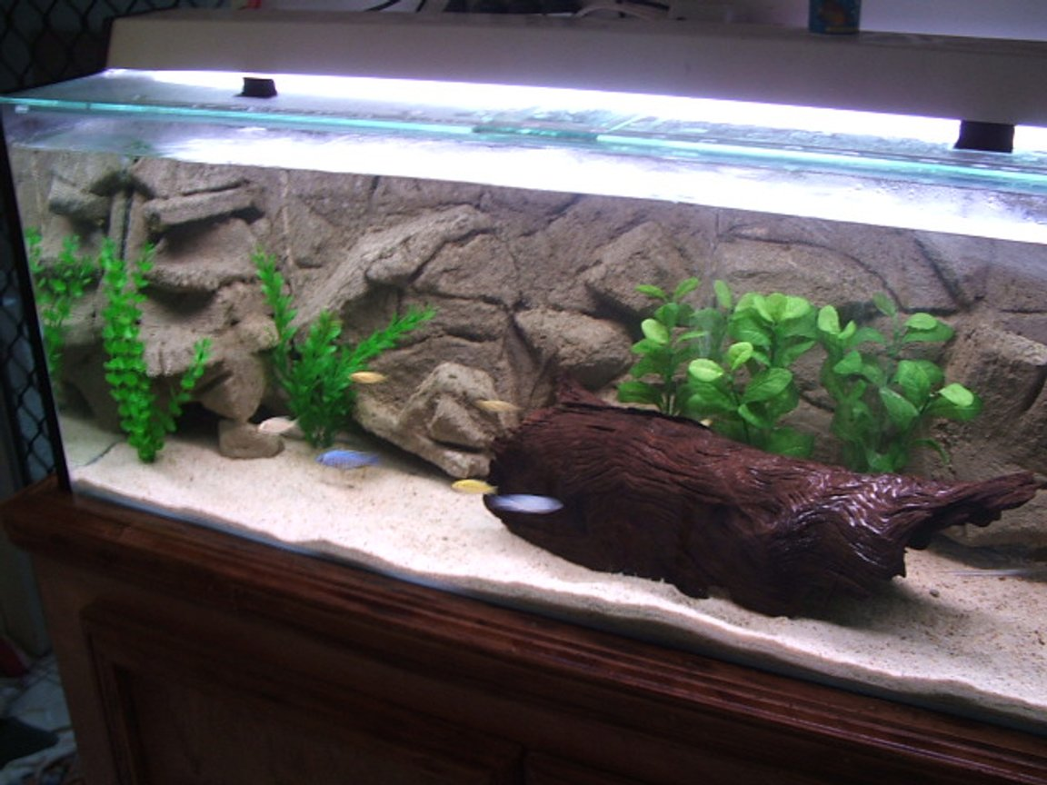 50 gallons freshwater fish tank (mostly fish and non-living decorations) - oasis