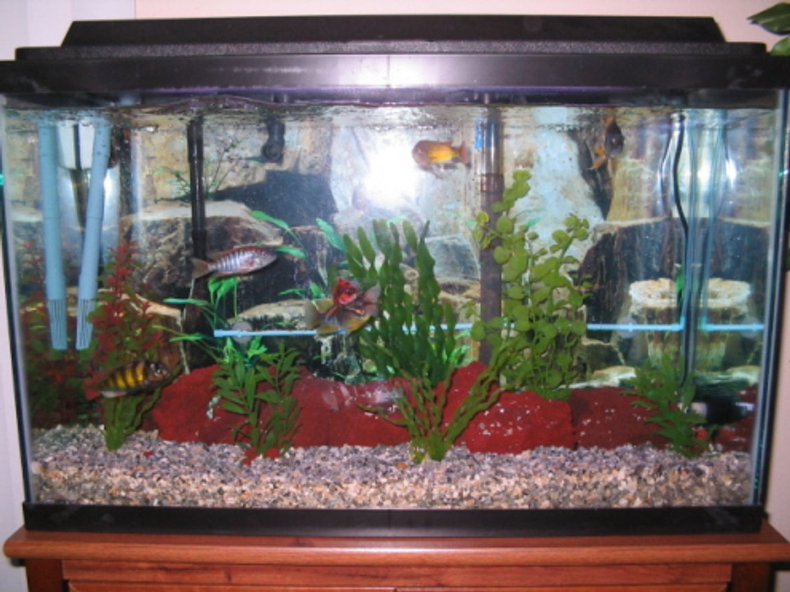 29 gallons freshwater fish tank (mostly fish and non-living decorations) - my tank again
