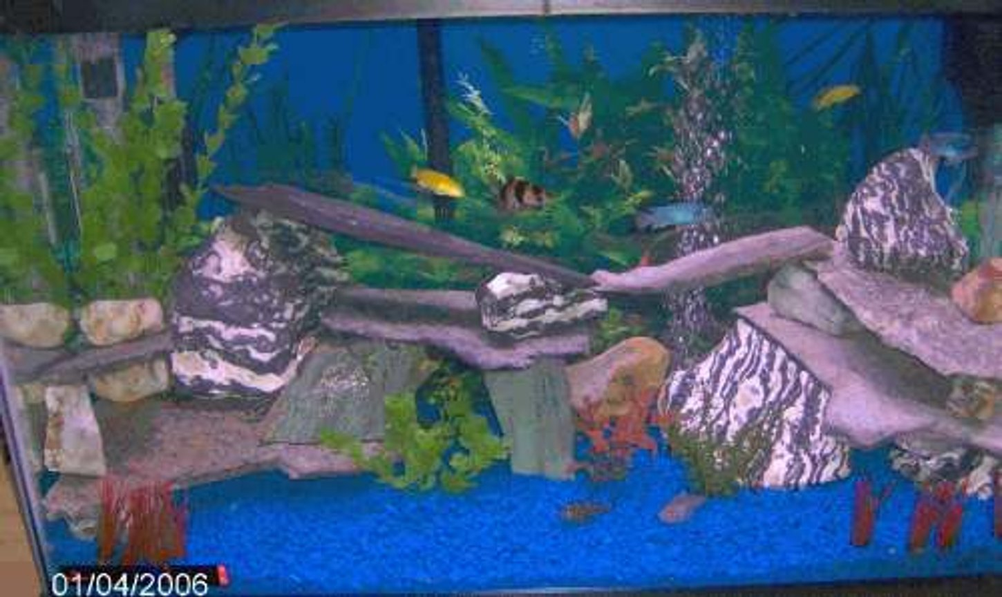 29 gallons freshwater fish tank (mostly fish and non-living decorations) - tank