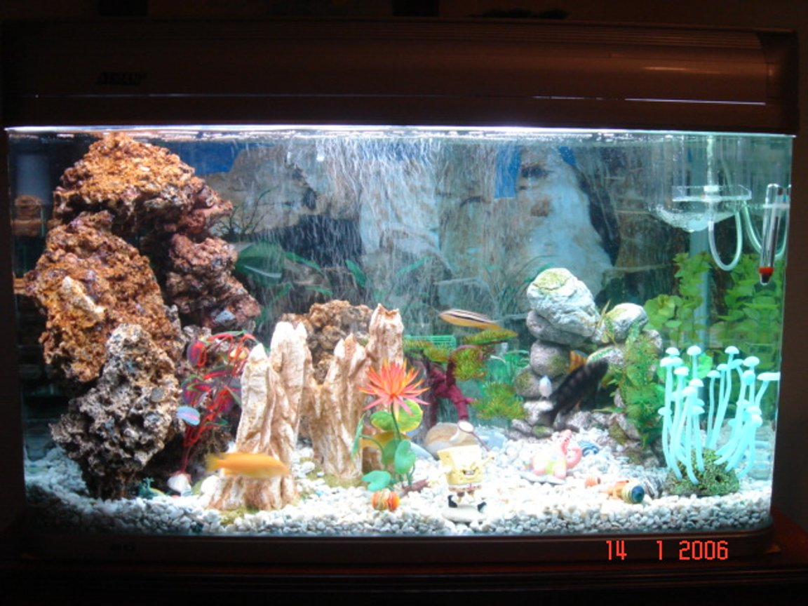 40 gallons freshwater fish tank (mostly fish and non-living decorations) - Its a 40 gallon African Tank with 16 Cichlids
