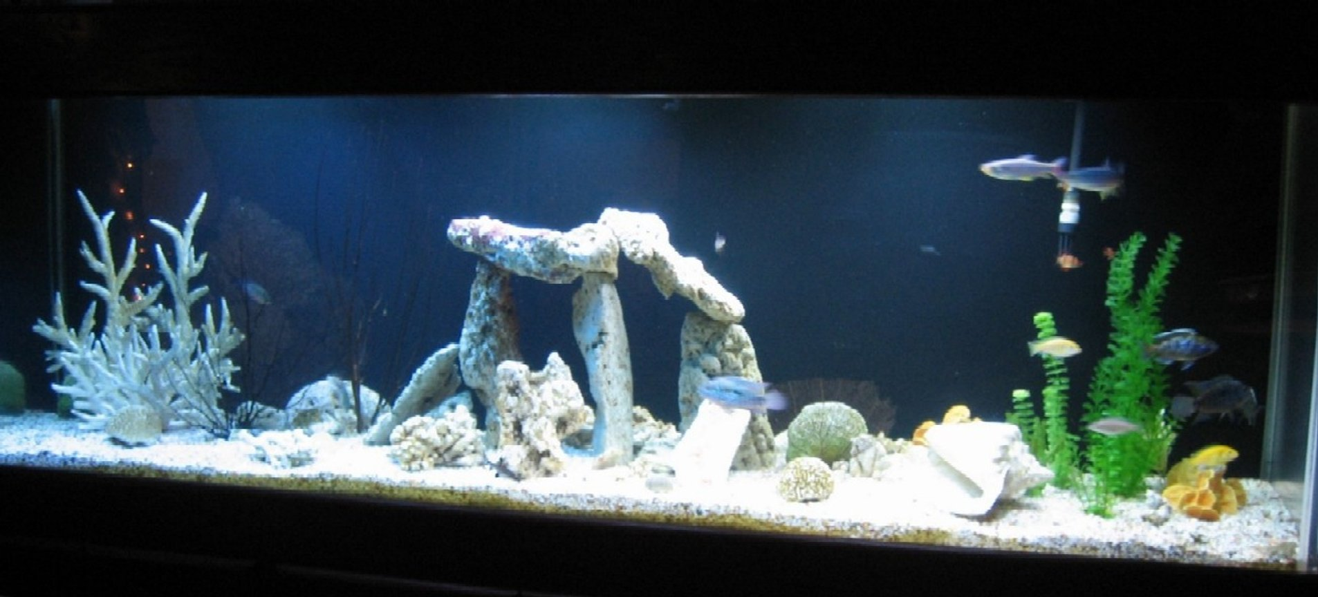 300 gallons freshwater fish tank (mostly fish and non-living decorations) - 300 gallon - 6 months in