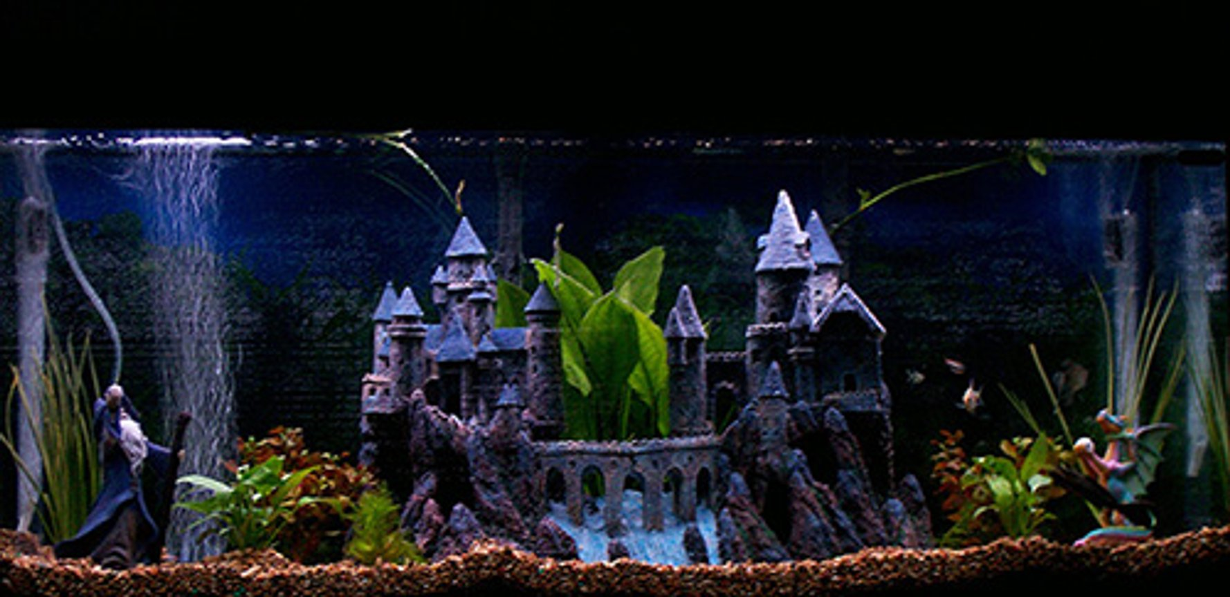 55 gallons freshwater fish tank (mostly fish and non-living decorations) - Magical