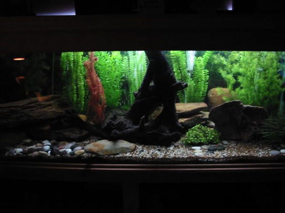179 gallons freshwater fish tank (mostly fish and non-living decorations) - lighting effect to simulate dusk/dawn