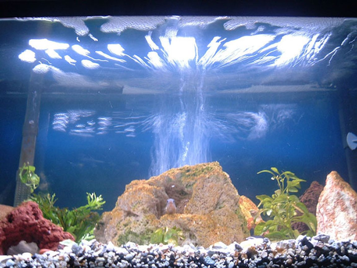 30 gallons freshwater fish tank (mostly fish and non-living decorations) - THE RING OF FIRE!!!