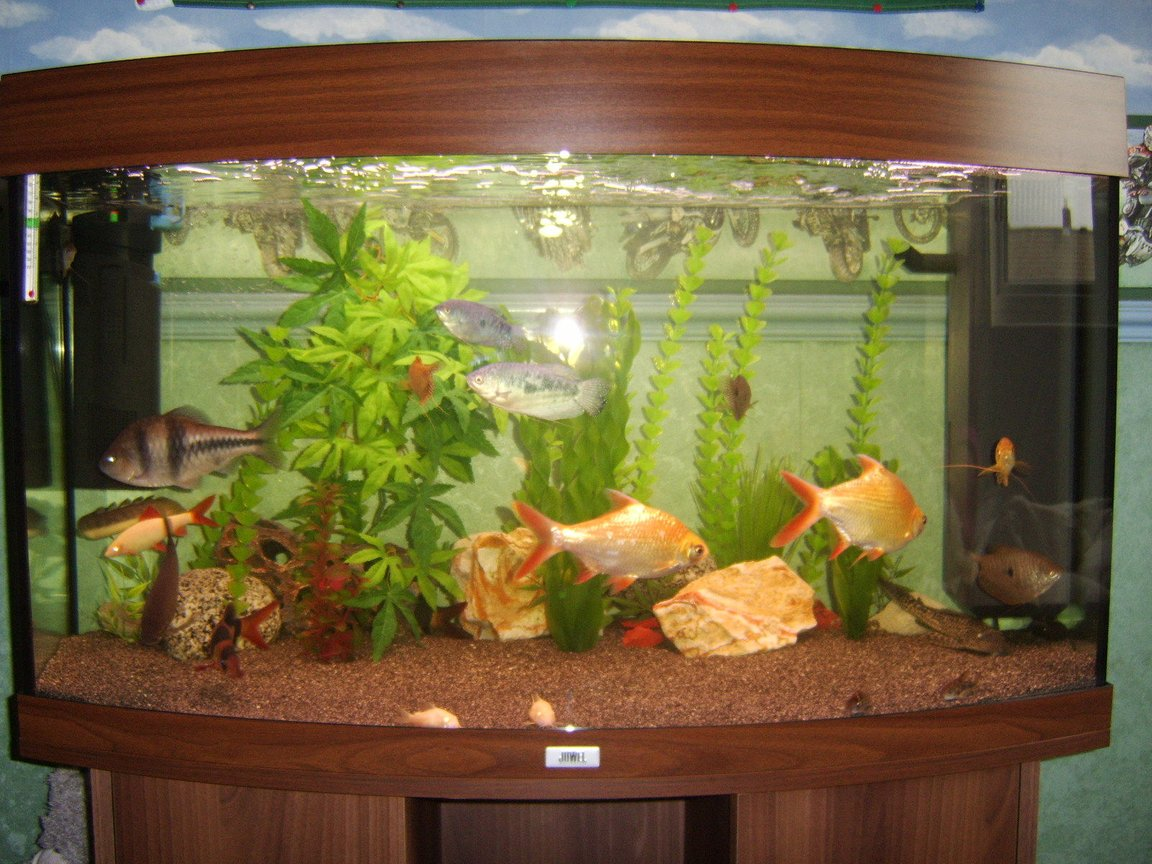 180 gallons freshwater fish tank (mostly fish and non-living decorations) - juwel vision 180