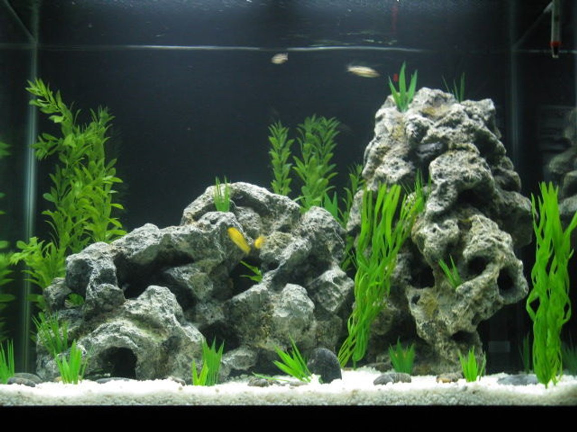 56 gallons freshwater fish tank (mostly fish and non-living decorations) - My new cichlid tank
