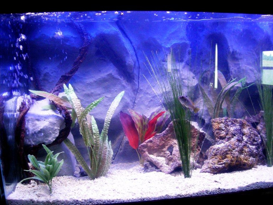 75 gallons freshwater fish tank (mostly fish and non-living decorations) - a closer picture of the left side
