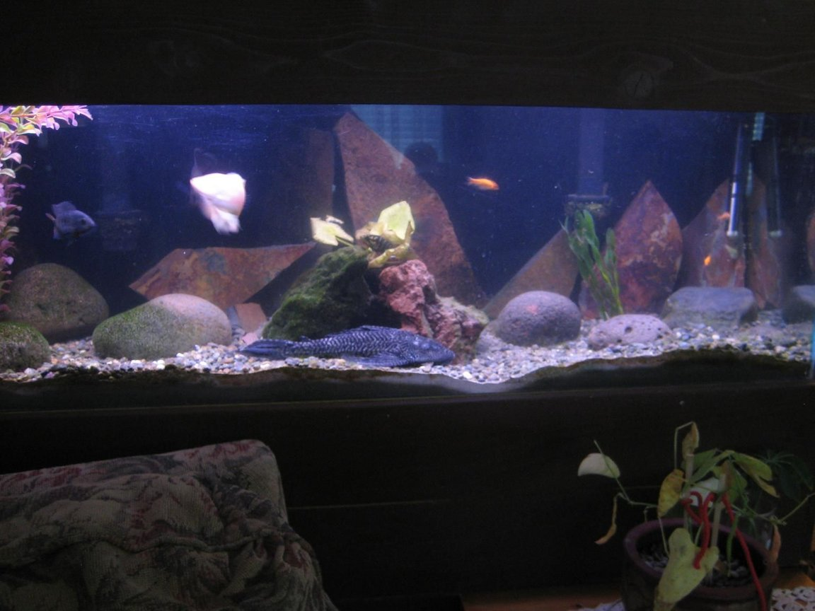 60 gallons freshwater fish tank (mostly fish and non-living decorations) - 50 gallon tank