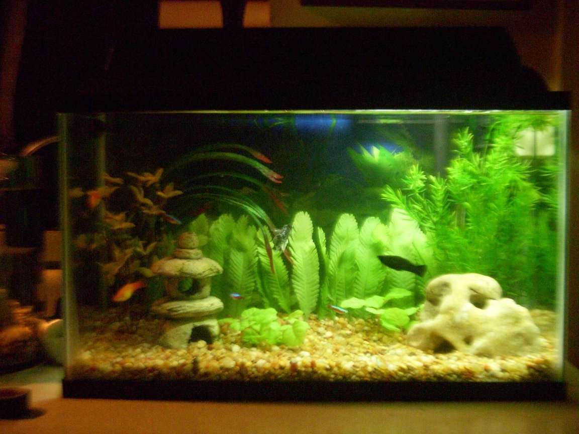 10 gallons freshwater fish tank (mostly fish and non-living decorations) - 10 Gallon Comunity Tank