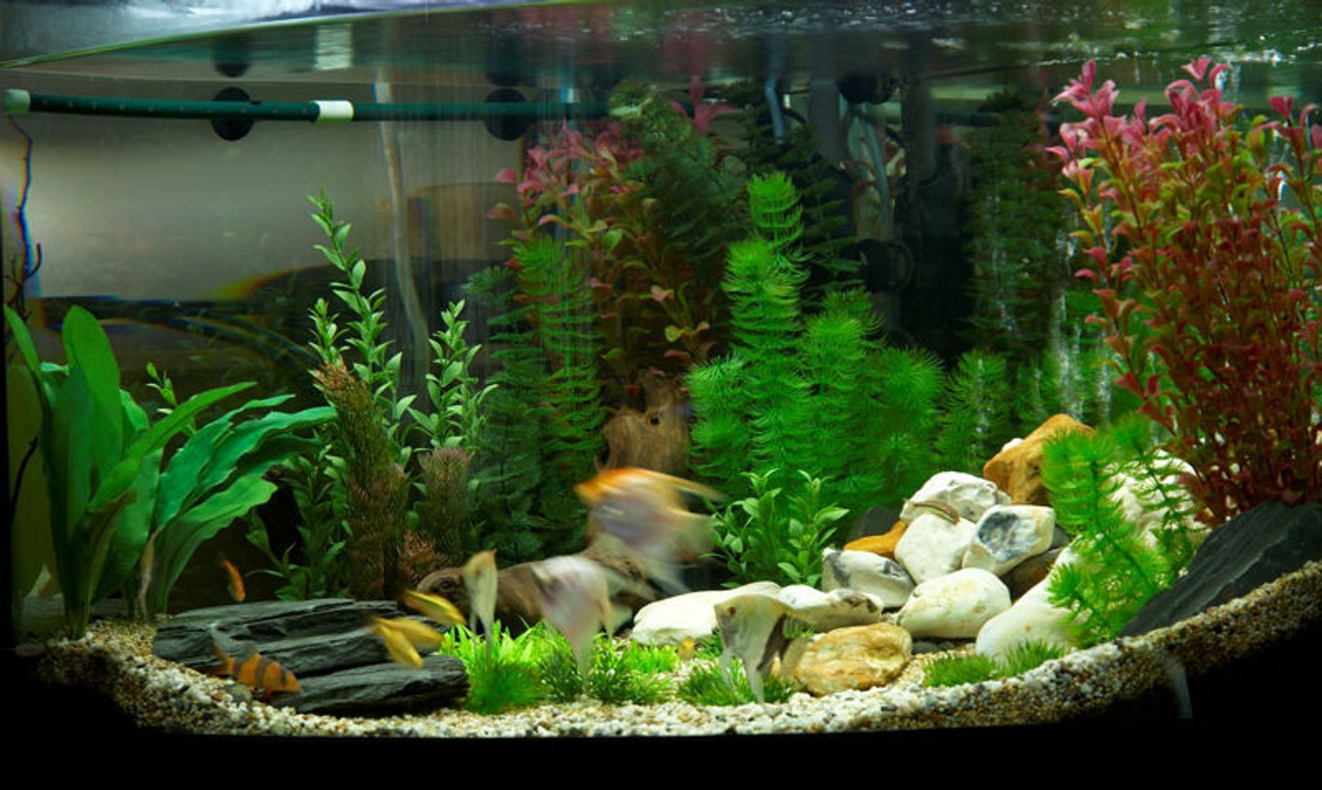 47 gallons freshwater fish tank (mostly fish and non-living decorations) - plastic plant tank..