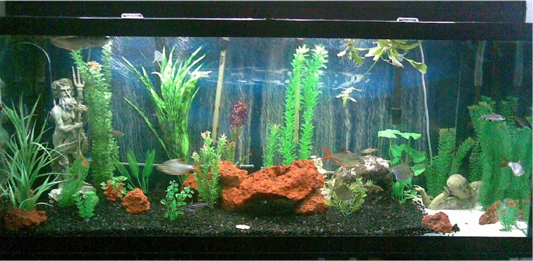 125 gallons freshwater fish tank (mostly fish and non-living decorations) - 125g tank