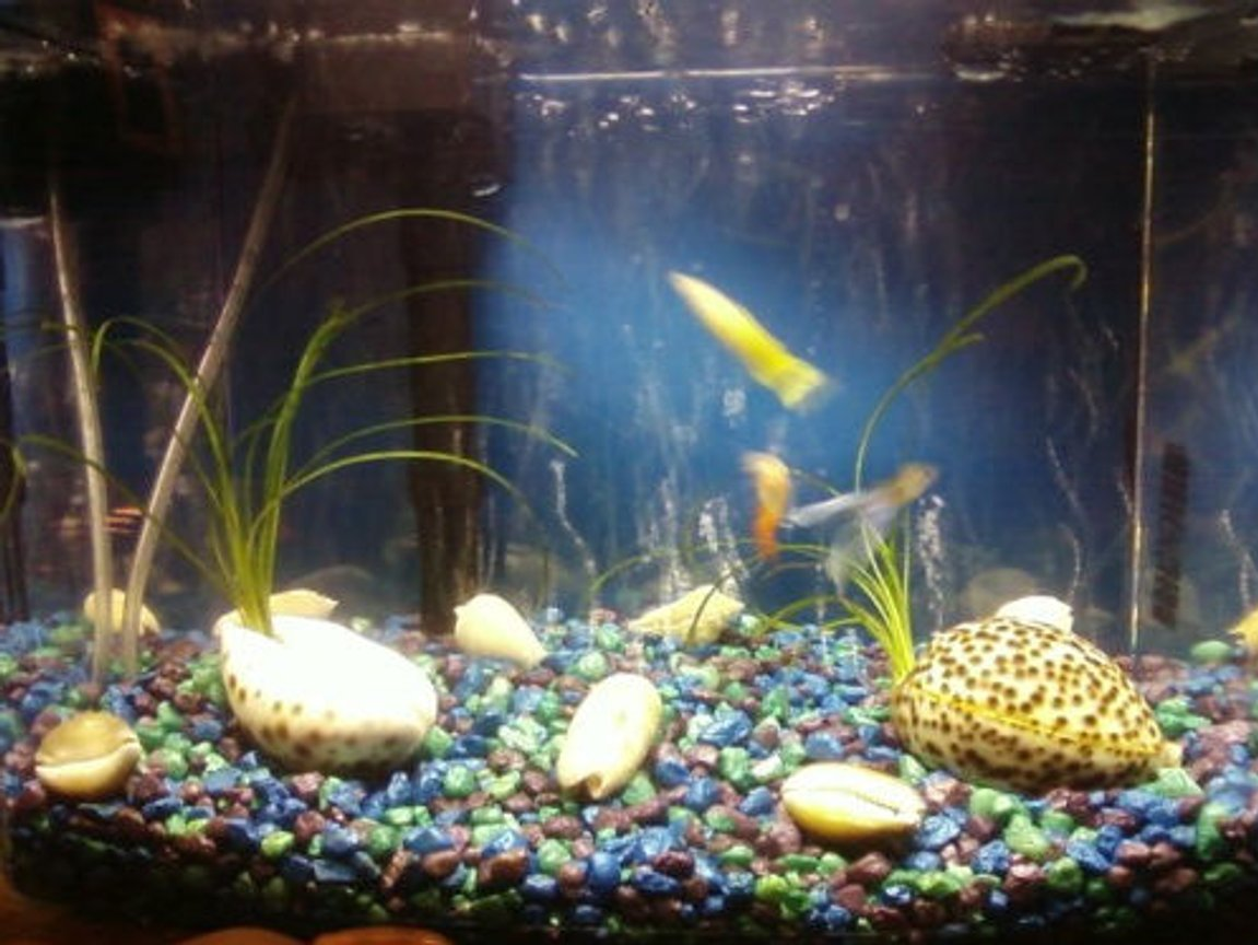 3 gallons freshwater fish tank (mostly fish and non-living decorations) - My 3-gal tank :)