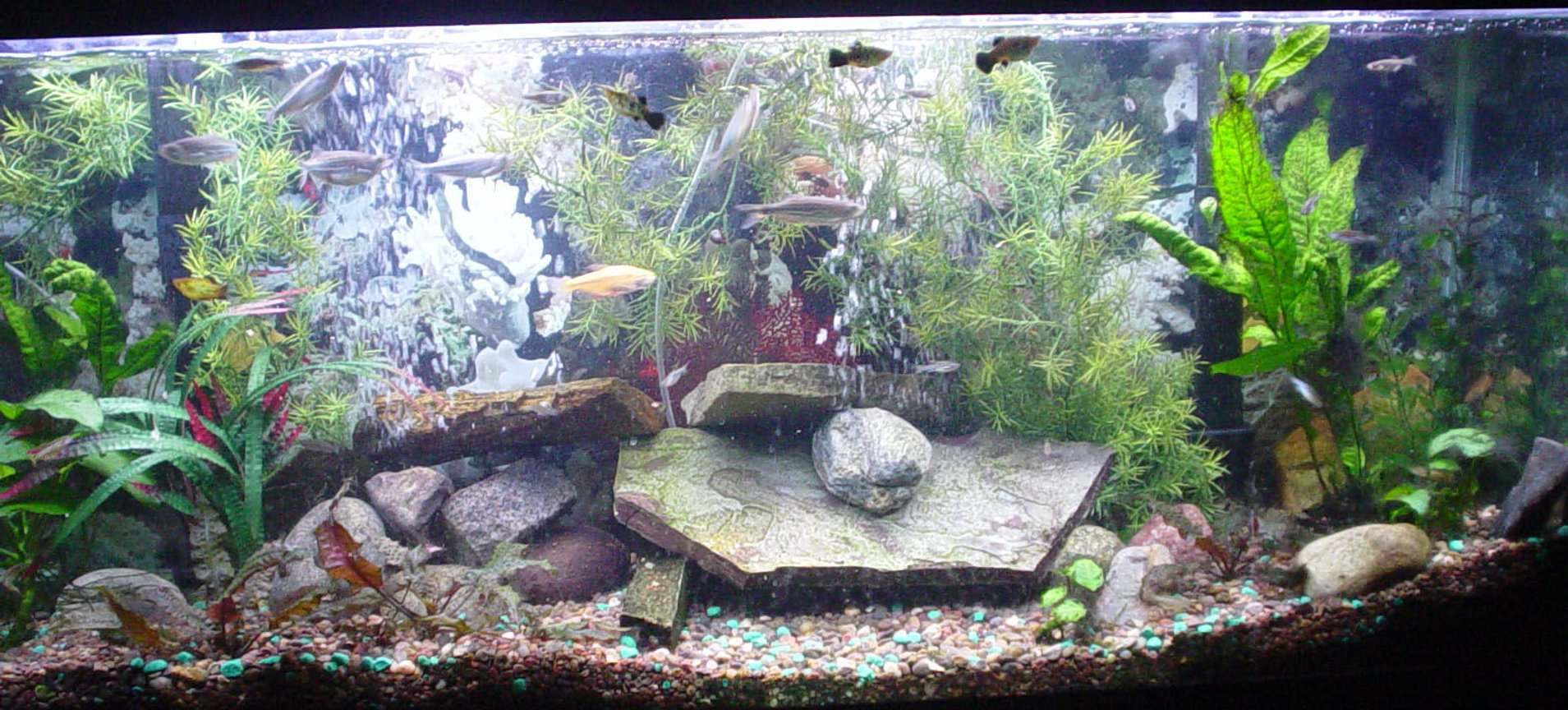 55 gallons freshwater fish tank (mostly fish and non-living decorations) - I think some good changes have been made