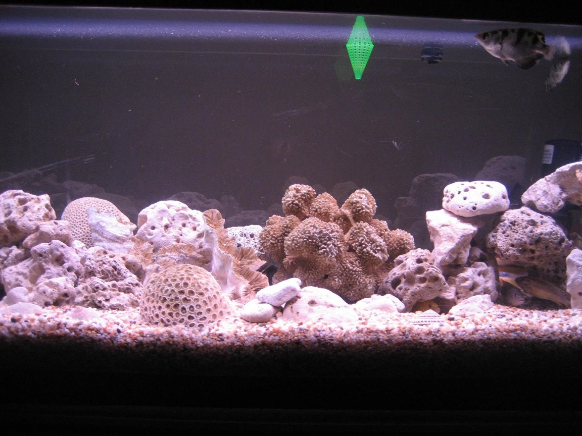 76 gallons freshwater fish tank (mostly fish and non-living decorations) - this is the full view of my fish tank