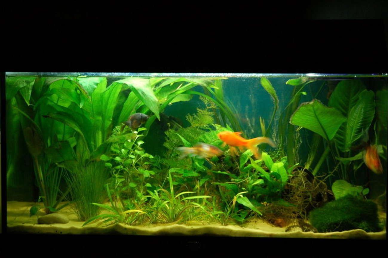 11 gallons freshwater fish tank (mostly fish and non-living decorations) - My 54l Juwel Rekord 60