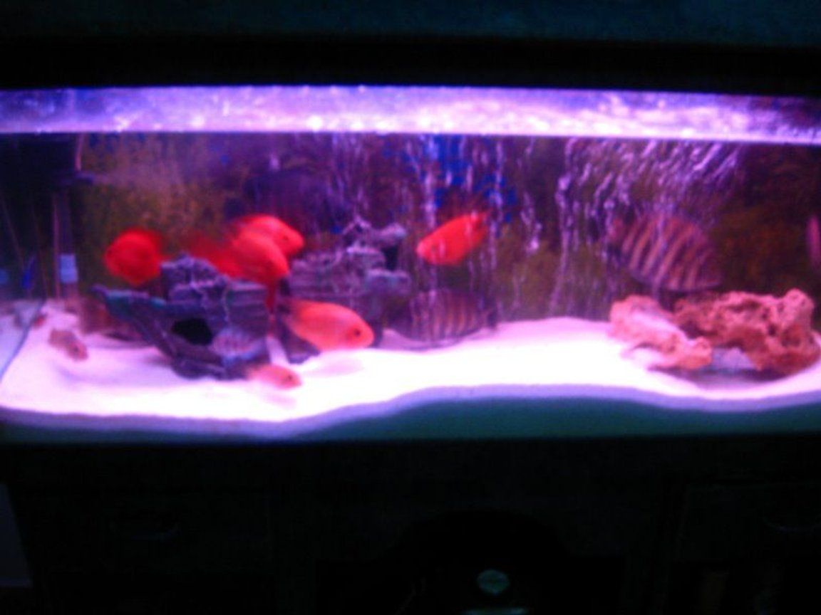 6 gallons freshwater fish tank (mostly fish and non-living decorations) - my fish tank