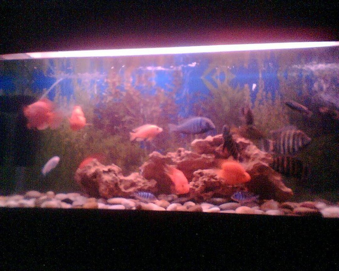 6 gallons freshwater fish tank (mostly fish and non-living decorations) - old setup