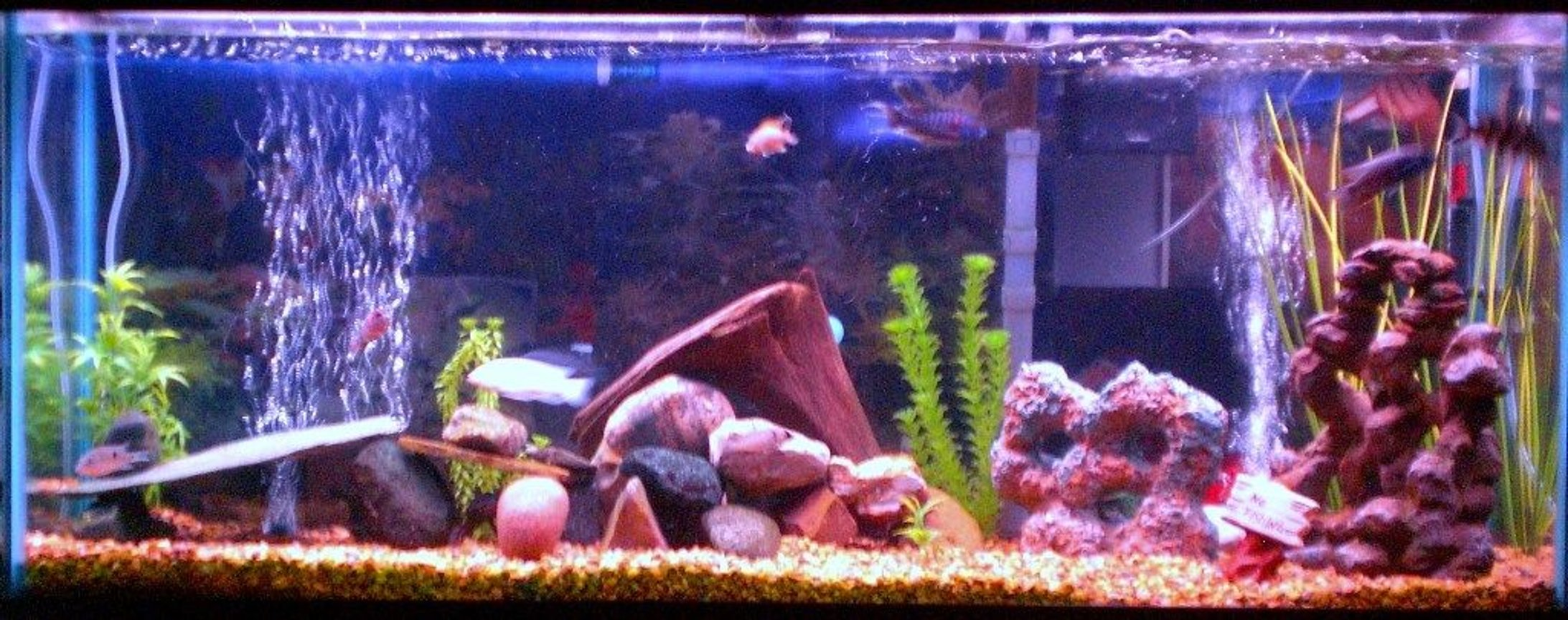 55 gallons freshwater fish tank (mostly fish and non-living decorations) - 55 gallon Freshwater Tank. Assorted African Cichlids.