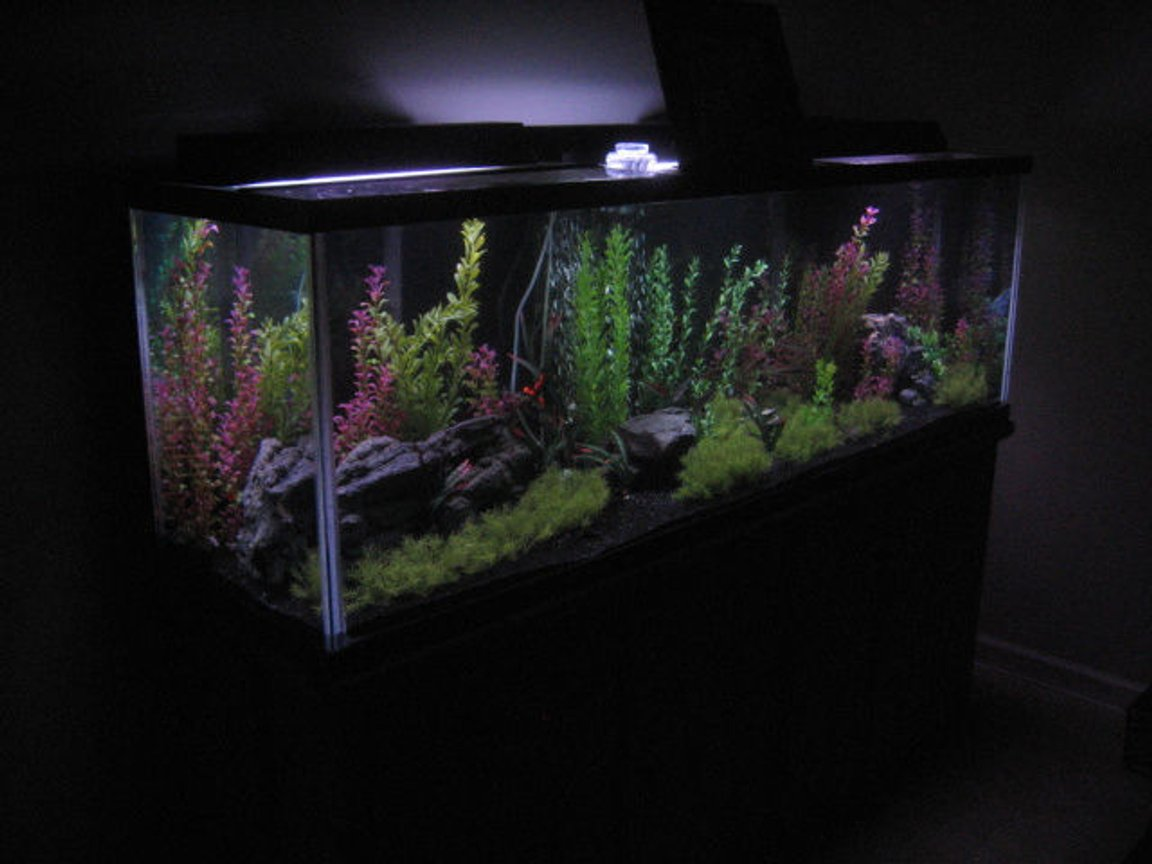 125 gallons freshwater fish tank (mostly fish and non-living decorations) - My 125 Gallon Community Tank