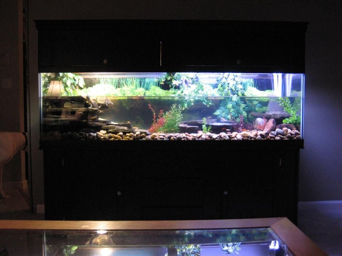 125 gallons freshwater fish tank (mostly fish and non-living decorations) - tank font