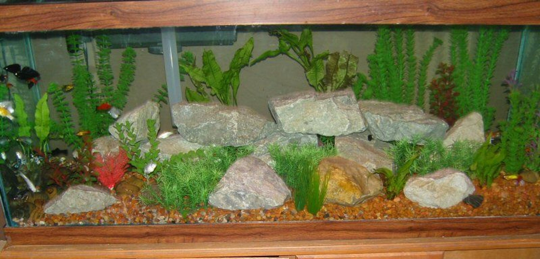 75 gallons freshwater fish tank (mostly fish and non-living decorations) - 75 gallon tank Mollies Swordtails Variatus