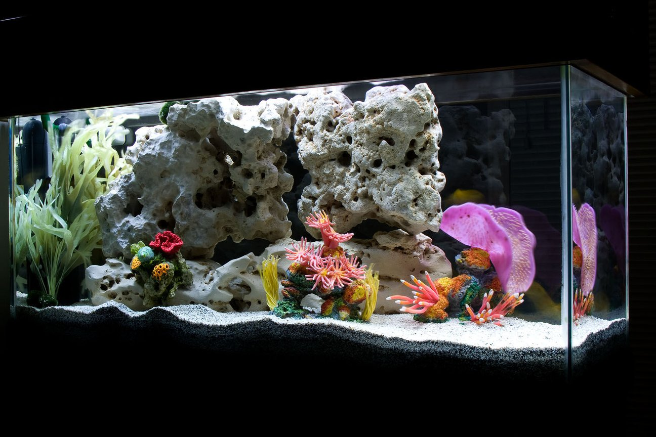 "30 gallons freshwater fish tank (mostly fish and non-living decorations) - My ""saltwater-themed"" African Cichlid tank."