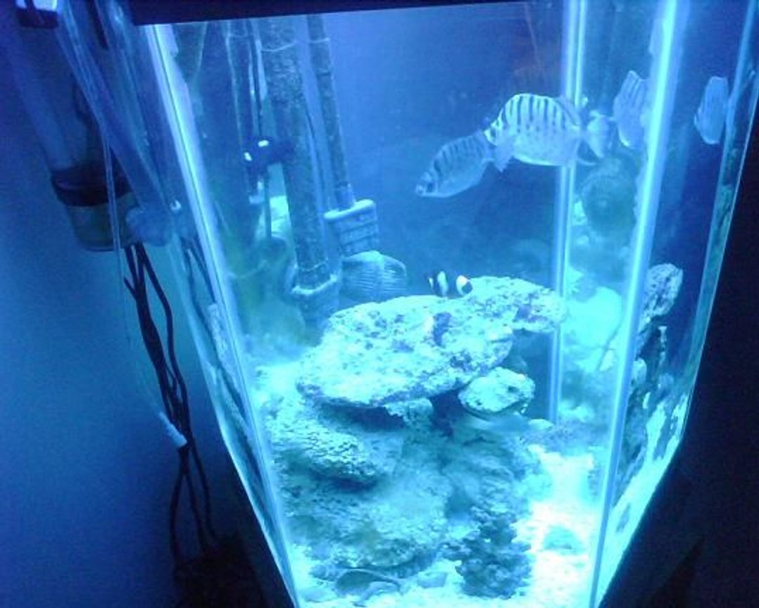 60 gallons freshwater fish tank (mostly fish and non-living decorations) - n/a