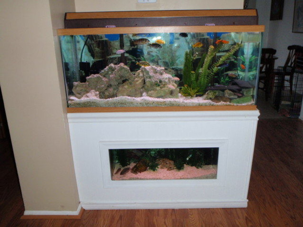 55 gallons freshwater fish tank (mostly fish and non-living decorations) - 55 Gallon African cichlid above 20 gallon SA cichlid tank