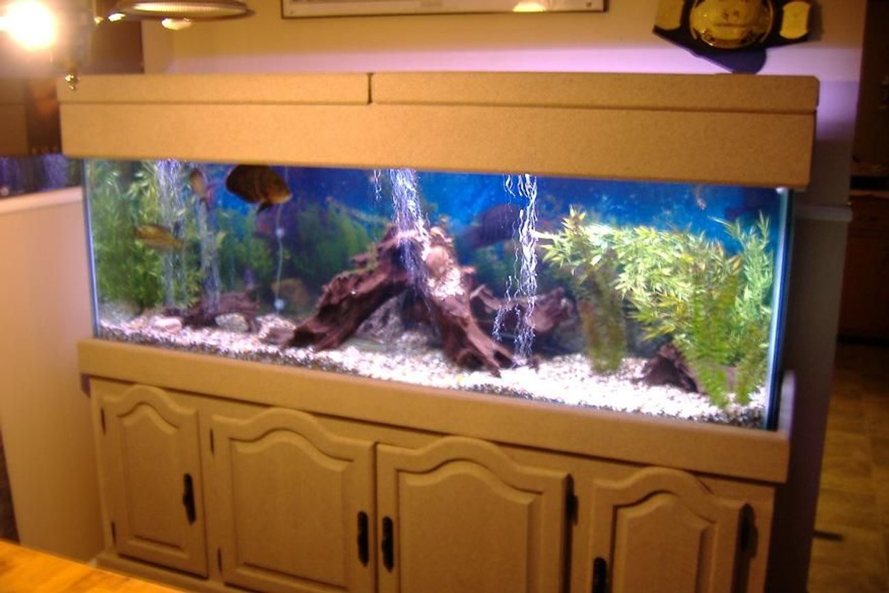 125 gallons freshwater fish tank (mostly fish and non-living decorations) - 125 tank