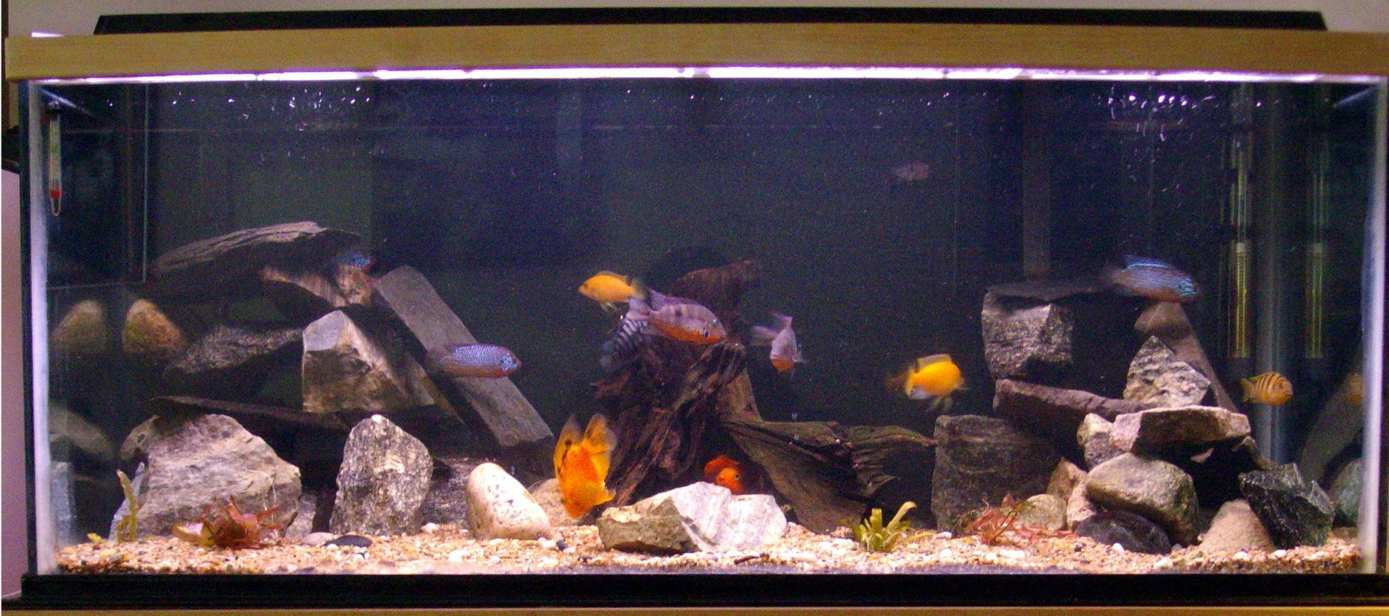 90 gallons freshwater fish tank (mostly fish and non-living decorations) - My 90 Gallon. Lots of rock caves and a few live plants.