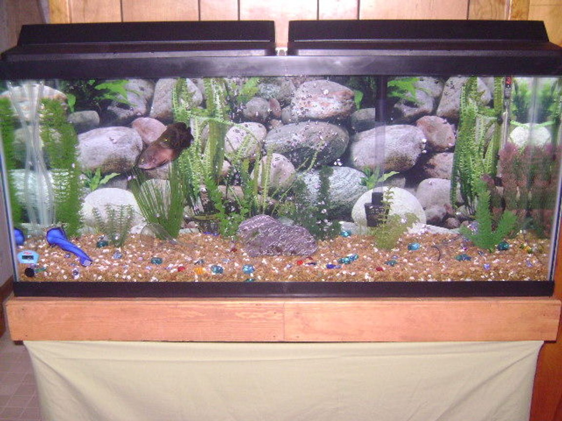 55 gallons freshwater fish tank (mostly fish and non-living decorations) - 55 Gallon Freshwater Tank