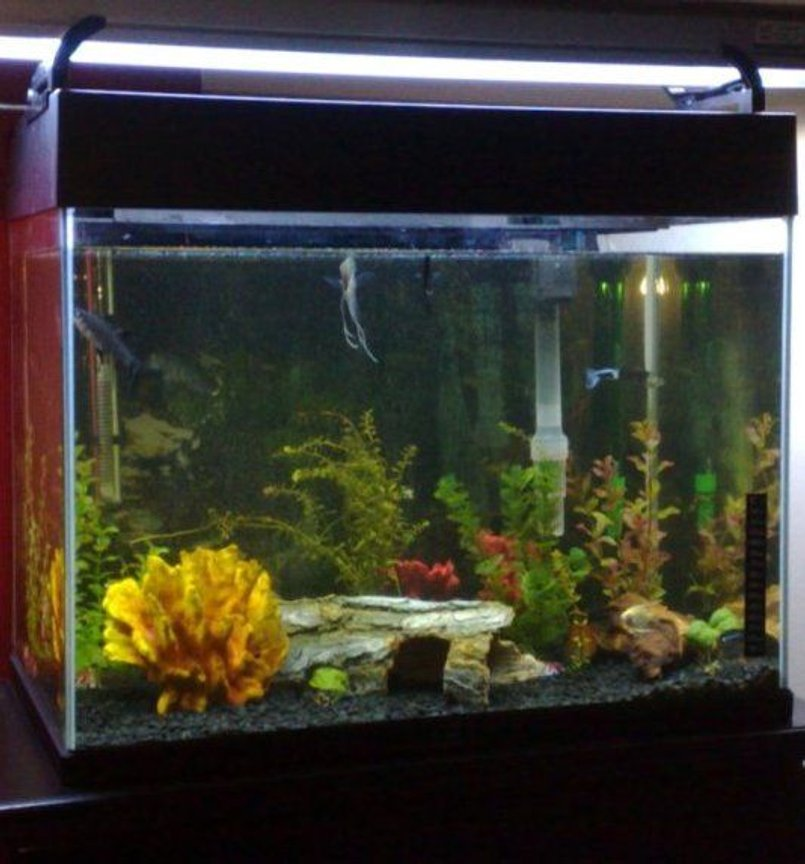 18 gallons freshwater fish tank (mostly fish and non-living decorations) - my first tank
