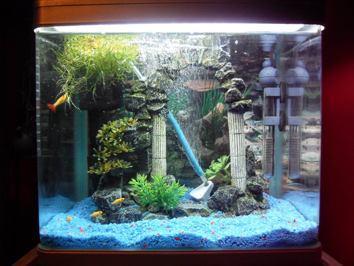 freshwater fish tank (mostly fish and non-living decorations) - Our 16 litre tank with 6 Molly Fry