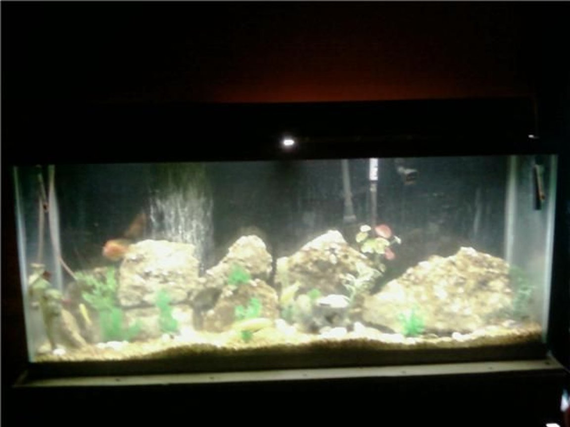 55 gallons freshwater fish tank (mostly fish and non-living decorations) - 55 gal. with chichilids