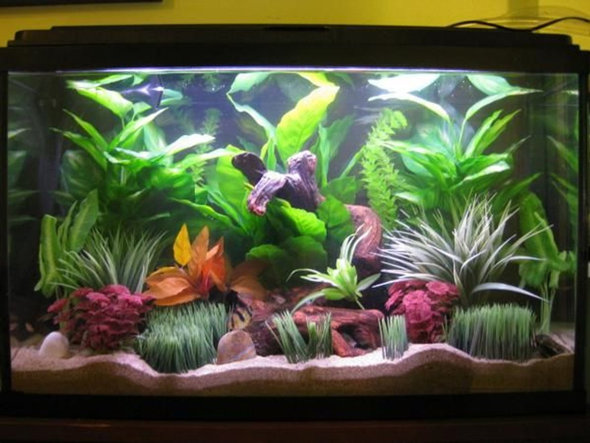 45 gallons freshwater fish tank (mostly fish and non-living decorations) - Front View of My 45G Freshwater Glass Tank.