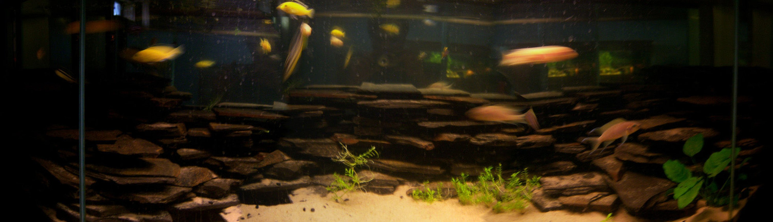150 gallons freshwater fish tank (mostly fish and non-living decorations) - 55 gal african tank