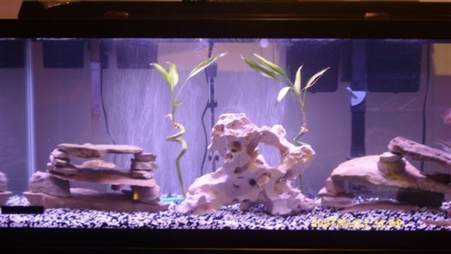 75 gallons freshwater fish tank (mostly fish and non-living decorations) - 75gal