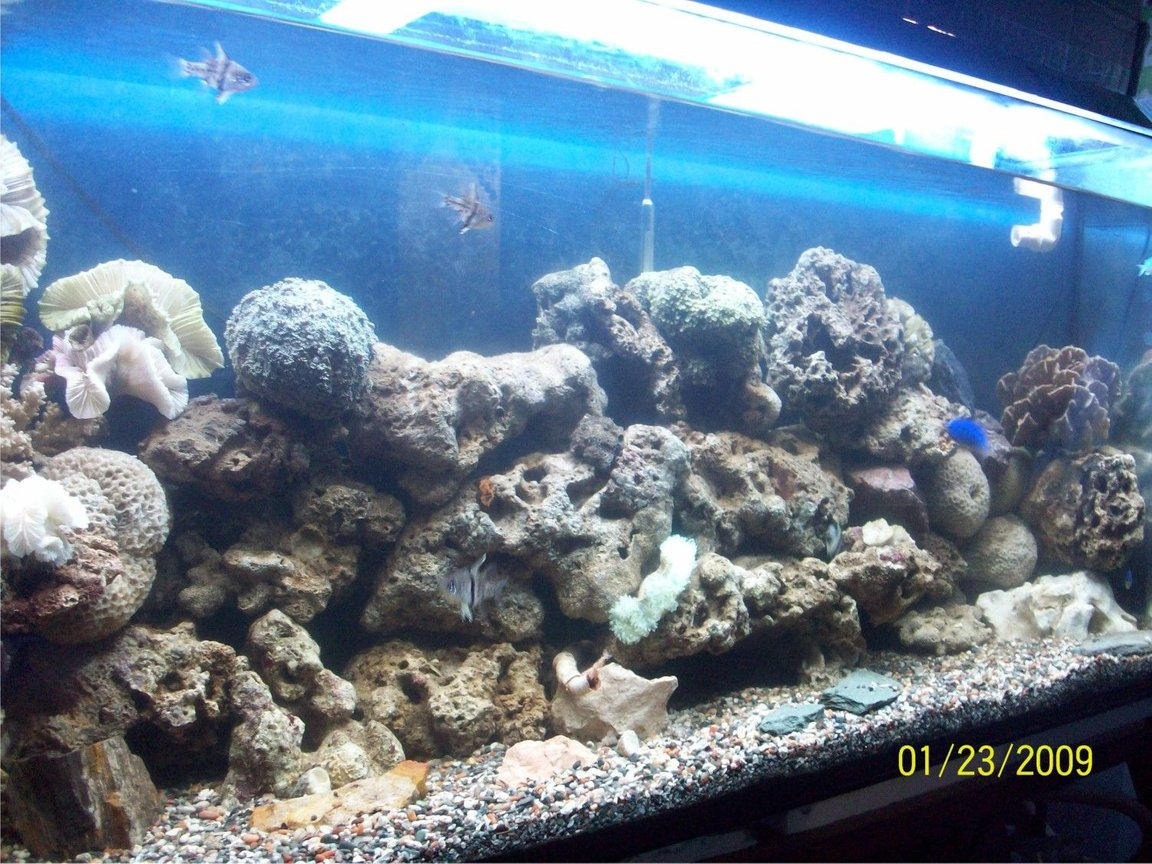 60 gallons freshwater fish tank (mostly fish and non-living decorations) - new set up tank