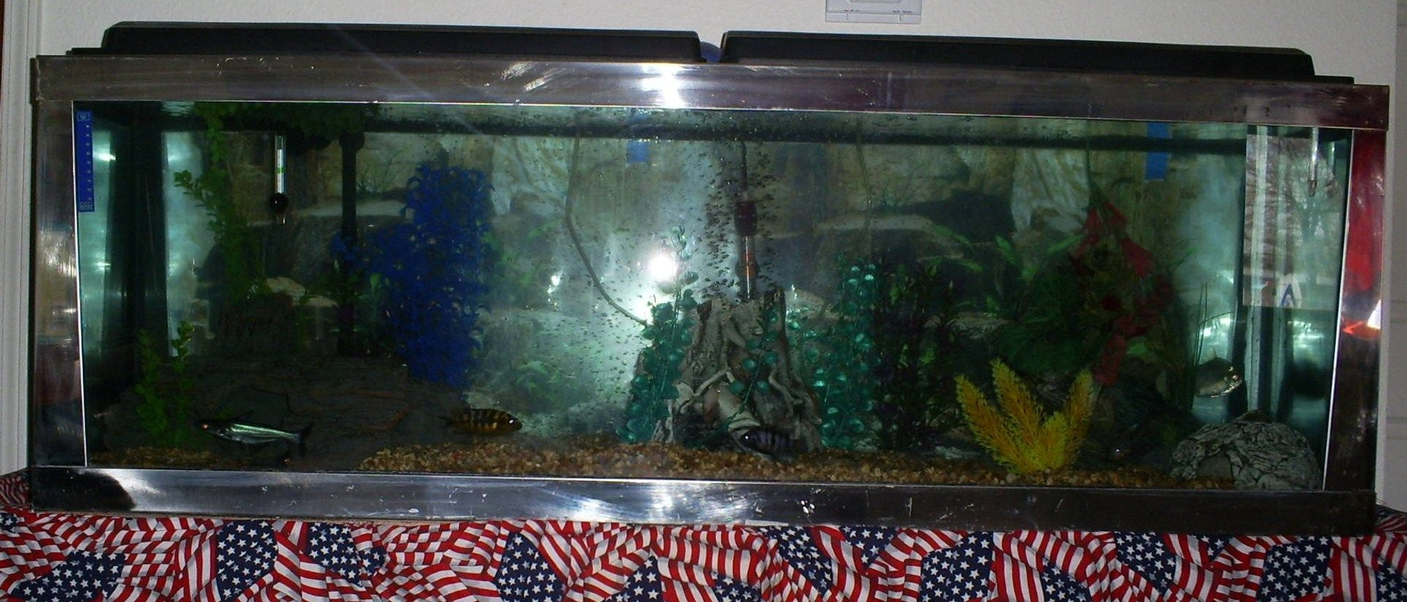 100 gallons freshwater fish tank (mostly fish and non-living decorations) - another front shot