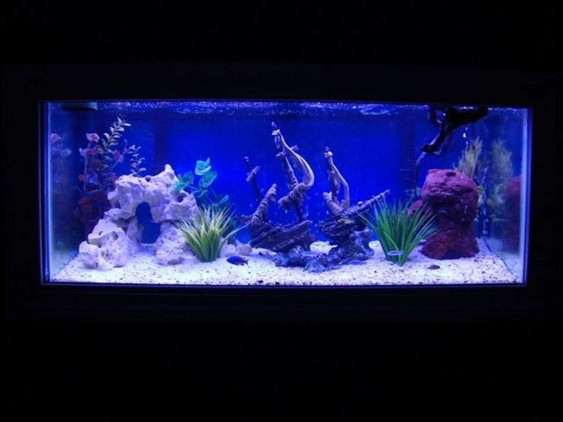75 gallons freshwater fish tank (mostly fish and non-living decorations) - 75 Gallon Cichlid Tank