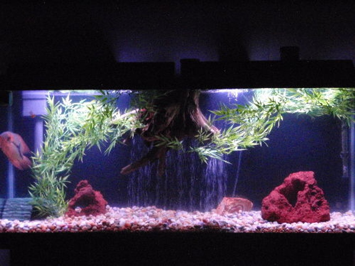 55 gallons freshwater fish tank (mostly fish and non-living decorations) - another 55 set up