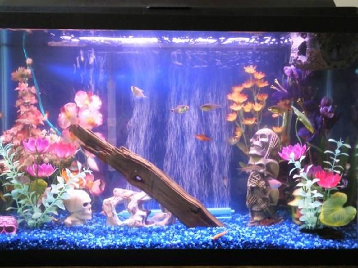 29 gallons freshwater fish tank (mostly fish and non-living decorations) - new picture of my fish aquarium. fake plants, drigtwood and rocks. decorated with skulls. wood log floating at top.