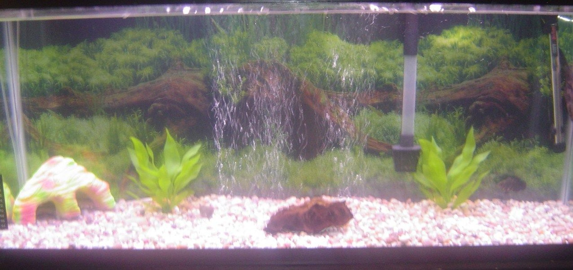 55 gallons freshwater fish tank (mostly fish and non-living decorations) - 55 gallon freshwater tank. Large bubble screen under rocks, small drift wood two artificial plants. The gravel is natural and the filter is a 30-60. Fish in the tank, 1 trinidad pleco and 1 small tiger oscar.